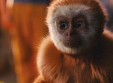31 maart: Kinderfilm – Monky